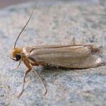 moth-150x150